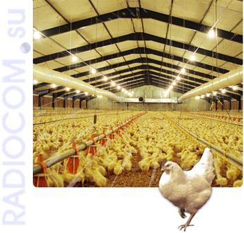 Радиостанции для птицефабрик и животноводческих хозяйств